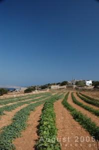 Village_Agia_Marina_Ver_018